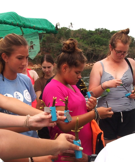 student volunteering - coral planting thailand
